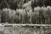 Birch River Prints - Old Country Print by Donna Blackhall