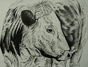 Longhorn Drawings Posters - Old English Longhorn Study Poster by Lucy Deane