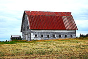 Cornfield Photos - Old Farm II by Kathy Sampson