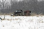 Old Truck Posters - Old Farm Truck in the Snow Poster by Laurie With
