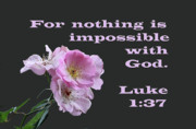 Bible Digital Art Prints - Old Fashion Pink Roses Luke 1 v 37 Print by Linda Phelps