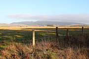 Tomales Bay Prints - Old Fence And Landscape Along Sir Francis Drake Boulevard At Point Reyes California . 7D9965 Print by Wingsdomain Art and Photography