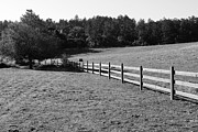 White And Black Landscapes Posters - Old Fence And Landscape At Point Reyes California . 7D9812 . Black and White Poster by Wingsdomain Art and Photography