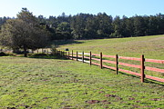 Tomales Bay Prints - Old Fence And Landscape At Point Reyes California . 7D9812 Print by Wingsdomain Art and Photography