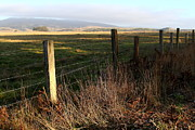 Tomales Bay Prints - Old Fence And Landscape At Point Reyes California . 7D9968 Print by Wingsdomain Art and Photography
