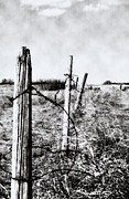 Rural Decay Art - Old Fence by Larysa Luciw