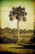 Textured Tree Prints - Old Florida Palm Print by Rich Leighton