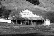 Old Barns Photo Prints - Old Foothill Farms in Small Town of Sunol California . 7D10796 . bw Print by Wingsdomain Art and Photography