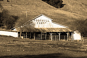 Old Barns Framed Prints - Old Foothill Farms in Small Town of Sunol California . 7D10796 . sepia Framed Print by Wingsdomain Art and Photography