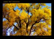 Lightning Wall Art Prints - Old Giant  Autumn Cottonwood Orton Print by James Bo Insogna