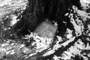 Fallen Leaf Photo Originals - Old Grave Embraced By Ancient Oak by Arni Katz