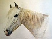 Horse Drawings Prints - Old Grey Print by Sue Ireland