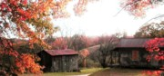 Hunting Camp Posters - Old Home Place and Barn In Fall Poster by Vonicia Verton