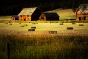 Idaho Scenery Posters - Old Homestead-Potomac Montana Poster by Thomas Schoeller