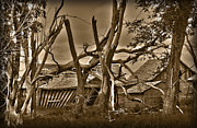 Shack Prints - Old Homestead Print by Shane Bechler