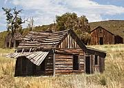 Old Cabins Digital Art - Old Homestead by Sharon Foster