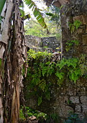 Old Jamaican Sugar Mill Print by Carol  Bradley - Double B Photography
