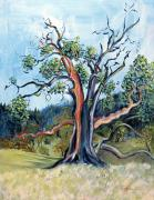 Fall Season Painting Posters - Old Madrone Tree in November  Poster by Asha Carolyn Young