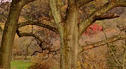 Landscape Photograpy Posters - Old Man in the Tree Poster by Bedford Shore Photography