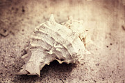 Seashell Art Prints - Old memories Print by Kristin Kreet
