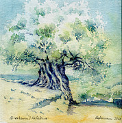 Greece Watercolor Paintings - Old olive tree by Thomas Habermann