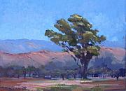 Cottonwood Paintings - Old One by Cindy Carrillo