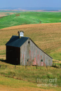 Farm Fields Framed Prints - Old Palouse Barn Framed Print by Sandra Bronstein
