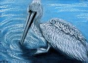 Wildlife Pastels - Old Pelican by Jan Amiss