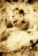 African Wild Life Posters - Old Photograph Of A Lion On A Rock Poster by Chris Knorr