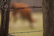 Barbed Wire Fences Photos - Old Post Fence by Kim Henderson