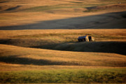 Alberta Foothills Landscape Prints - Old ranch buildings in Alberta Print by Mark Duffy
