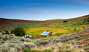 Cattle Ranch Prints - Old Ranch Print by Robert Bales