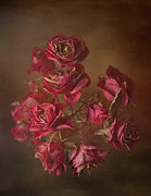 Old Wall Pyrography Prints - Old Roses Print by Karen Martin