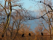 Avian Art Metal Prints - Old Rusted Fence Metal Print by Gothicolors And Crows