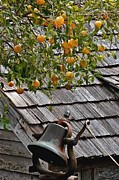 Siding Prints - Old School Bell Neath the Orange Tree Print by DigiArt Diaries by Vicky Browning