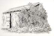 Shed Drawings Prints - Old Shed Print by Deborah Dallinga