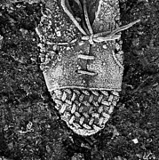 Ecology Art - Old shoe by Bernard Jaubert