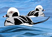 Ducks Paintings - Old Squaw Ducks by Barry Louwerse
