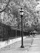 Fences Prints - Old Street Lights Print by Amanda Vouglas