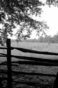 Old Sturbridge Fence In Black And White Print by Belinda Dodd