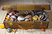 Traveling Posters - Old suitcase full of sea shells Poster by Garry Gay