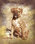 Boxer Puppy Digital Art Metal Prints - Old Time Boxer Portrait Metal Print by Angie McKenzie