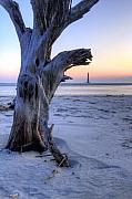 Folly Beach Posters - Old Tree and Morris Island Lighthouse Sunrise Poster by Dustin K Ryan