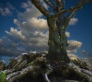 Old Tree Print by Vladimir Kholostykh