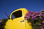 Broken Down Framed Prints - Old Truck Converted to Flower Planter Framed Print by David Buffington