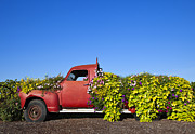 Broken Down Photos - Old Truck Converted to Garden Planter by David Buffington