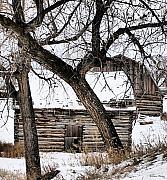 Old Ulm Barn Print by Susan Kinney