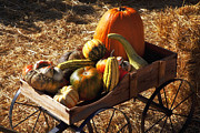 Hay Bale Photos - Old wagon full of autumn fruit by Garry Gay