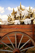 Wagons Prints - Old wagon full of buffalo skulls Print by Garry Gay