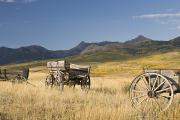 Foothill Prints - Old Wagons, Foothills, Alberta, Canada Print by Philippe Widling